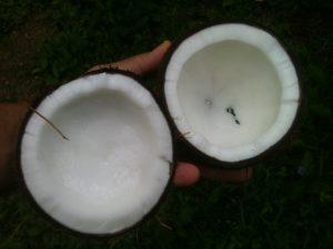 Kookosõli on hea valik nii salatisse kui ka küpsetamisel.