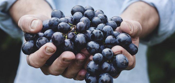 Viinamarjas sisalduv glükoos on sama, mis meie veres ringlev glükoos.