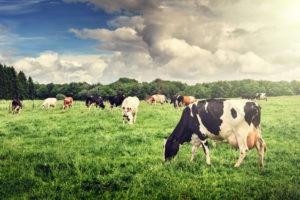 Oomega-3-rasvhappeid leidub rohkem naturaalse toidu peal olnud loomadest tehtud saadustes.