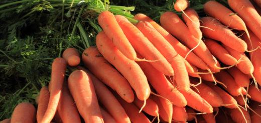 Porgandis leidub hulgaliselt karotenoide, mis on A-vitamiini eelühenditeks organismis.
