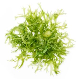 Toiduainetel seguneda aitavat ainet agar-agar (E406) saadakse vetikatest.