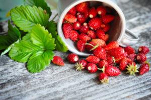 Suvel on Eesti metsades rohkelt maitsvaid ja vitamiinirikkaid metsmaasikaid.