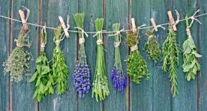 Alternatiiviks taimeteede ostmisele kauplusest või apteegist on ravimtaimi ise korjata ja kuivatada.