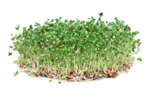 Brokolit idandades tuleb arvestada, et toas levib mõningane väävlilõhn.